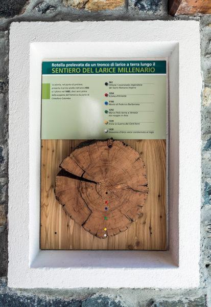 Larice-millenario-della-Valmalenco-e1493880270515